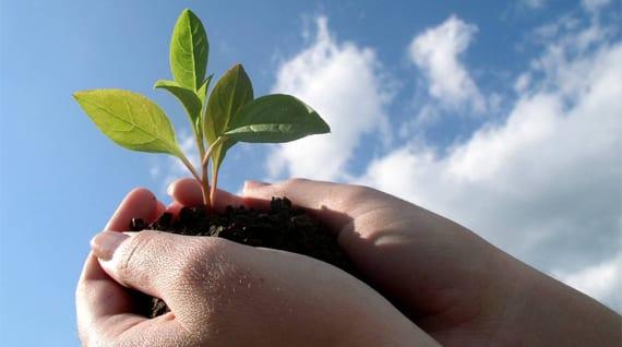 crecimiento planta