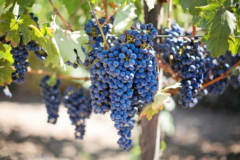 Las claves para canalizar la inversión en vino