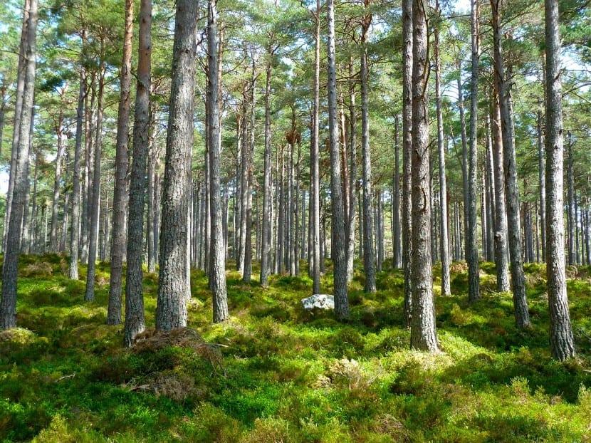 fondos de inversión ecologicos