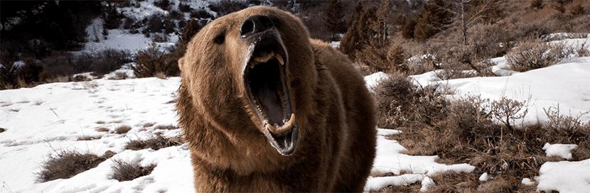 zarpazo-oso